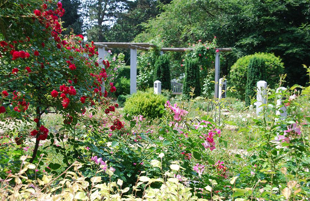 Garten Rosenfrieden auf dem Stadtfriedhof Celle